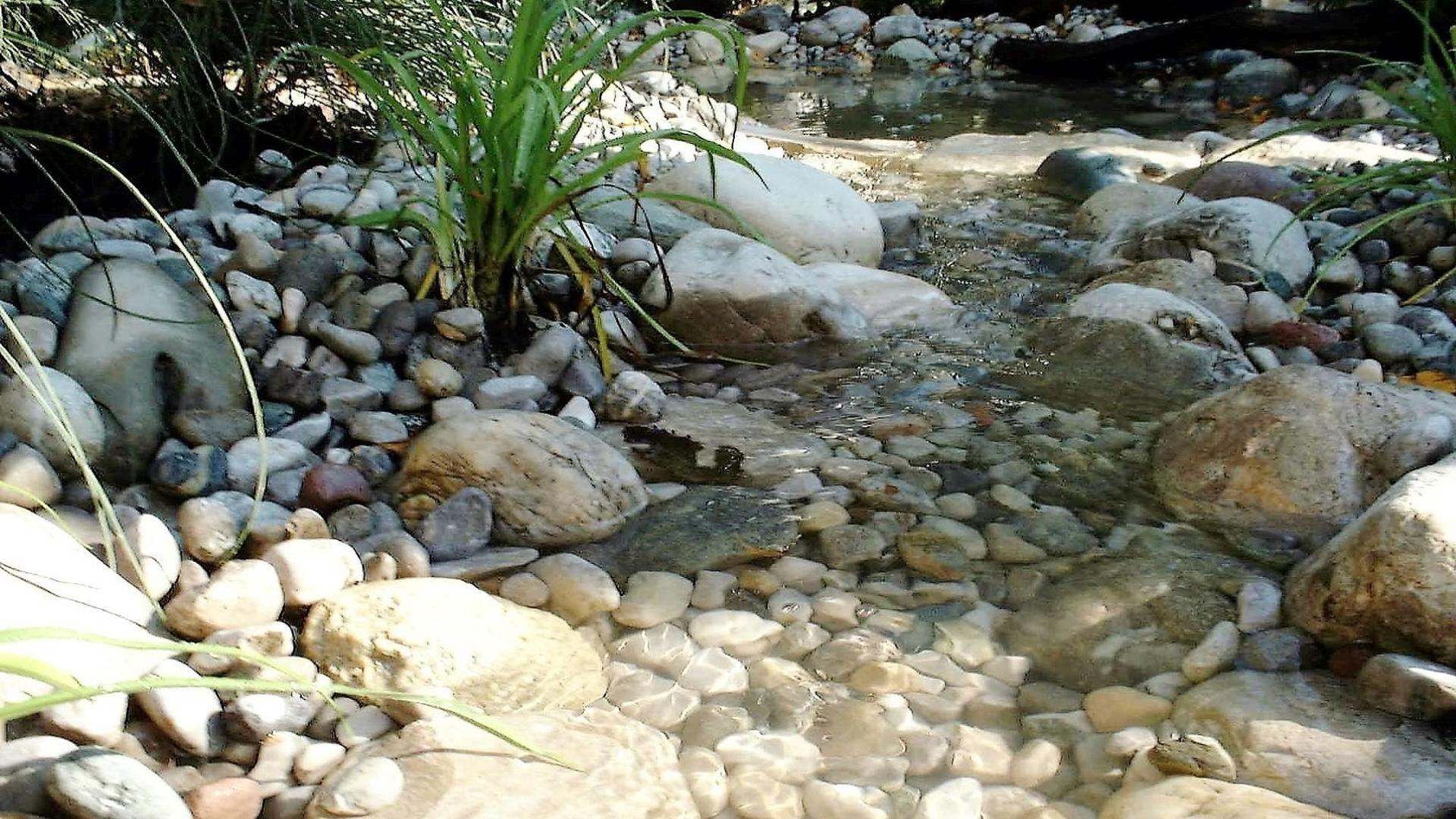 Wasser Teich Large